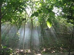 Dancing Light (A.T.E.F.E.H) Tags: sun tree garden esfahan نور درخت باغ طبيعت آفتاب atefeh شعاع برگ عاطفه غبار عاطی شهشهانی