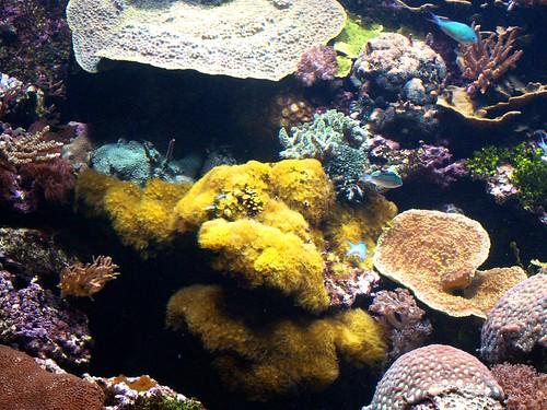 fish paris france coral aquarium palaisdelaportedorée