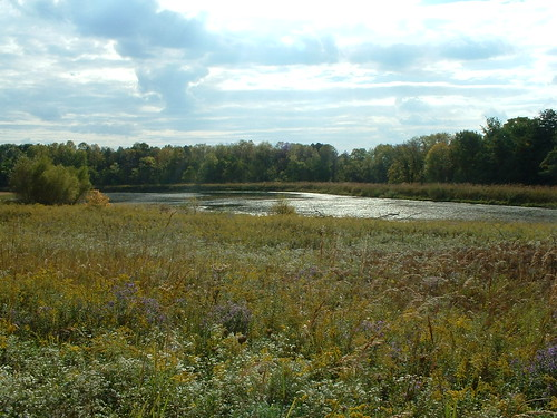 Slate Run Wetlands