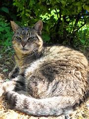 samuel (lynx15.) Tags: samuel catnipaddicts