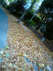 Autumn Leaves (eyair) Tags: autumn ireland dublin fall leaves leaf ashmashashmash