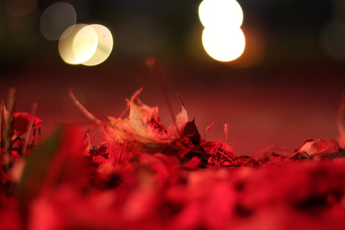 45/52: leaves by taillight