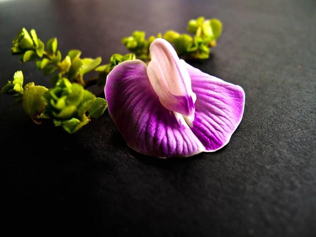 IMG_1265 Artistic Flower