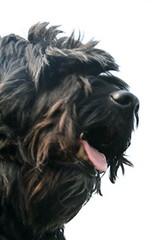 Tommy 195 (Amigrante Nnimo) Tags: dog chien cane fur hond tommy perro hund pelo badbreath peludo elmejoramigodelhombre malaliento muchopelo elmejoramigodestehombre