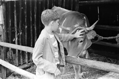 0706a70 16 37 (ndpa / s. lundeen, archivist) Tags: boy blackandwhite bw animal museum de mexico cow blackwhite mexicocity child cattle bell trix nick july horns bull mexican museo 1970 alexander 1970s nacional museonacionaldeantropologia dewolf antropologia nickdewolf photographbynickdewolf