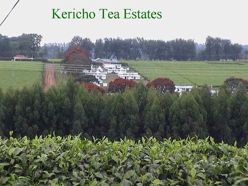 Kericho Housing on Tea Estates