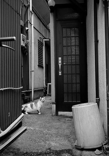 ポリバケツと猫
