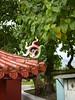 96.09.15六龜尾莊路台灣唯一克蘭老樹DSCN2088