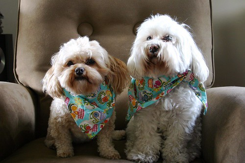 Sisters: a quick one day visit called for a quick matching bandana
