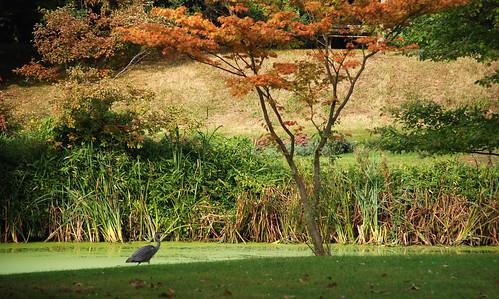 Syon Park 13
