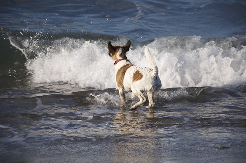 Then bark at the waves. You can actually chase them away from the shore. But theyre tricky. They keep coming back.