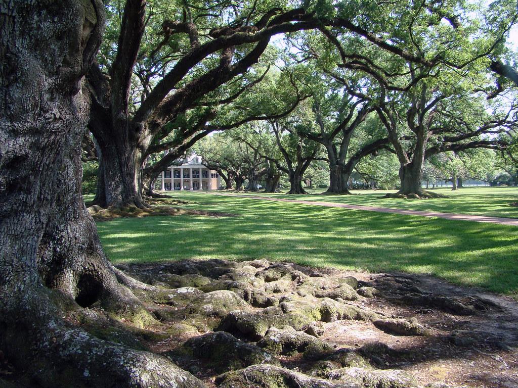 Dutchbaby: Oak Alley Plantation