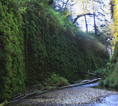 Fern Canyon, Prairie Creek Redwood State Park (Michellekiba) Tags: park panorama creek state sonoma roadtrip mendocino redwood prairie fortbragg californiacoast lostcoast hiway1 compositephotos californiaphotographer womeninphotography michellekibaphotography canond50user