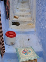 P8082271 (urdarntootin) Tags: morocco maroc chaouen chefchaouen