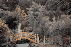 Sepia-Chinese Garden (Nala Rewop) Tags: uk england sepia garden interestingness chinese explore nationaltrust staffordshire biddulphgrange