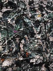 Jackson Pollock (I like green) Tags: nyc moma pollock