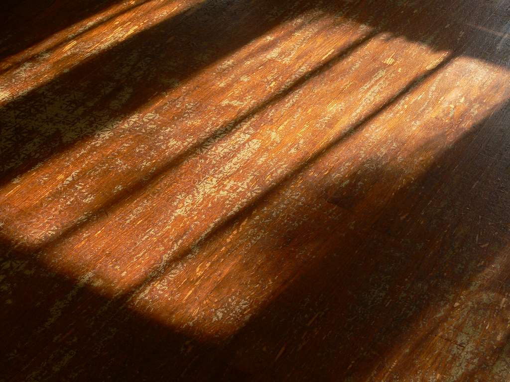 Sun on Hardwoods