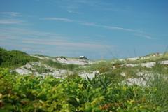 Island Beach State Park (Trail A13)