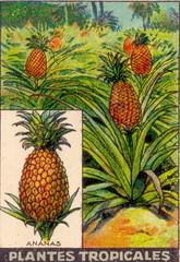pl tropic 10