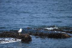 海鳥の涼み