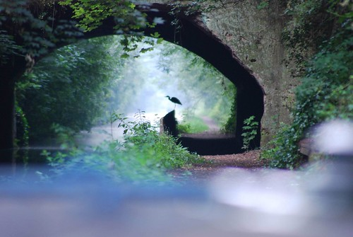 Heron in Cowley Tunnel