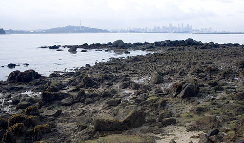 rocky shore and city view
