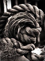 Coiled - S5isBound (Daniel Y. Go) Tags: bw canon mono philippines rope powershot bound chords imag supershot anawesomeshot wowiekazowie diamondclassphotographer s5is canons5is gettyimagesphilippinesq1