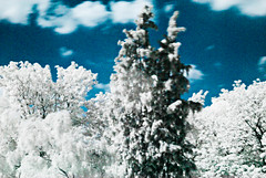 I know, this looks awful... (manganite) Tags: blue trees sky white nature colors clouds digital germany geotagged ir nikon colorful europe bonn tl filter infrared fixed d200 nikkor dslr 50mmf18 northrhinewestphalia utatafeature manganite nikonstunninggallery date:year=2007 gluckstrasse geo:lat=50733265 geo:lon=7090159 september162007 rg7803 date:month=september date:day=16 format:ratio=32
