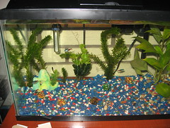 The new fish at Flickr.com