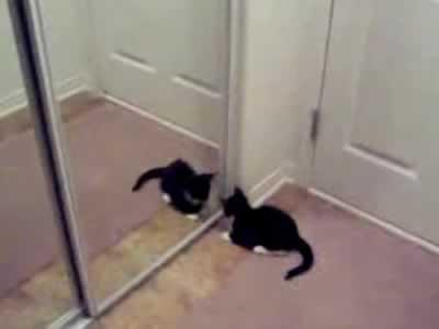 Gatito atacando el espejo