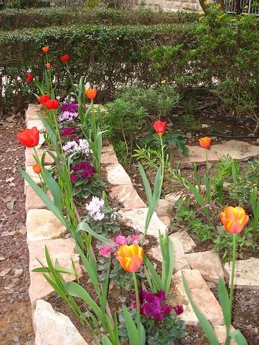 Jyydek Jerusalem Tulip Flower