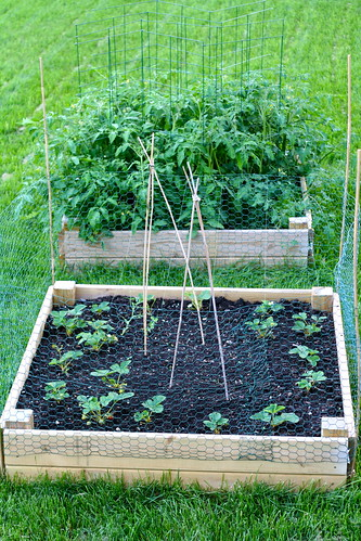 Raised Beds: June 21