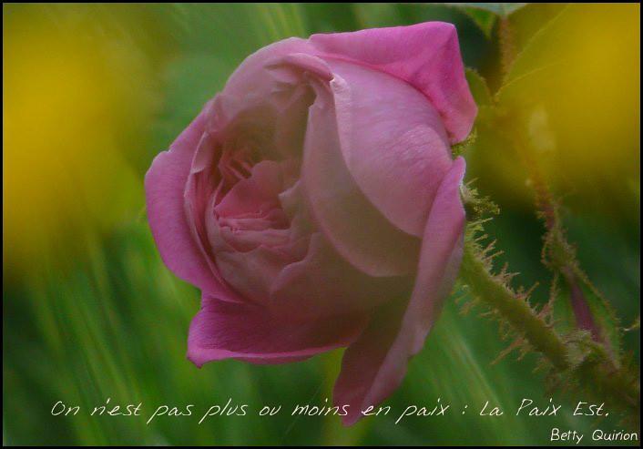 L'Être et la Rose