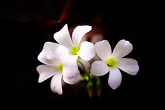 Night Light (roch photography) Tags: light flower fantasticflower