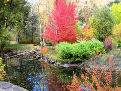 Fall Pond Reflections (cweav59) Tags: park blue red green water colors yellow reflections pond colorado canyon viestenzsmith