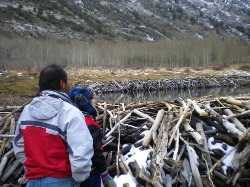Admirando la presa que hicieron los castores
