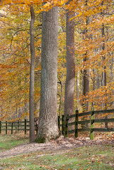 Peek-a-Boo (Chrys H) Tags: family autumn tree fall fence lens photography nikon pennsylvania vaughn carney chestercounty d80 02places 01people tamron18270mm 01southeastregion wolfshollowcountypark