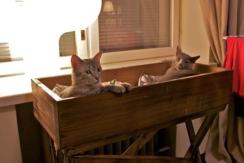 Kissoilla on uusi loota.