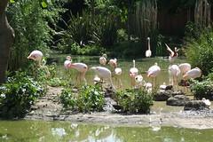 London Zoo #28