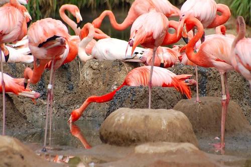 zoo june '070005