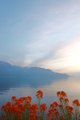 Lake Geneva sunset (Michael Andrassi) Tags: flowers sunset lake nature topf25 topv111 ilovenature switzerland flora topv555 topv333 nikon d70s 100v10f topc100 soe lakegeneva naturesfinest wonderworld blueribbonwinner cotcmostfavorited worldbest 30faves30comments300views anawesomeshot aplusphoto superbmasterpiece diamondclassphotographer flickrdiamond ysplix focuslegacy spseeingthelight swisspeeks2 michaelandrassi mikeya mmmikey2007