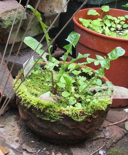 Mossy bowl
