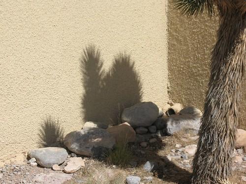 spiky bunny shadow