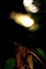 IMG_1228 (Jonathan Carr) Tags: light tree rural landscape stump northeast landed