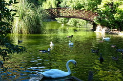 Villa Durazzo Pallavicini  - Lago Grande (klausthebest) Tags: italy genoa genova villadurazzopallavicini lake water animals bridge lago acqua animali ponte swan duck bird reflections italians holidaysvacanzeurlaub naturesfinest supershot wonderworld worldbest favoritegarden naturewatcher superbmasterpiece abigfave diamondclassphotographer bestpicturesonflickr avianexcellence theperfectphotographer a3b 10faves firsttheearth