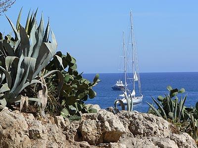 cactus et bateaux.jpg