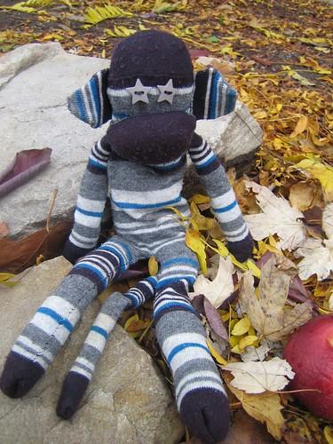 autumnal minkey
