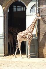 London Zoo #5