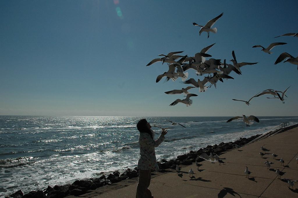 海鸥,海鸥 - 艾小柯 - 流浪者的乡愁
