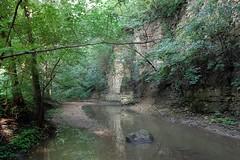 dellwood stream3
